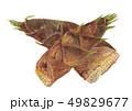 Phyllostachys heterocycla モウソウチク(たけのこ) 49829677