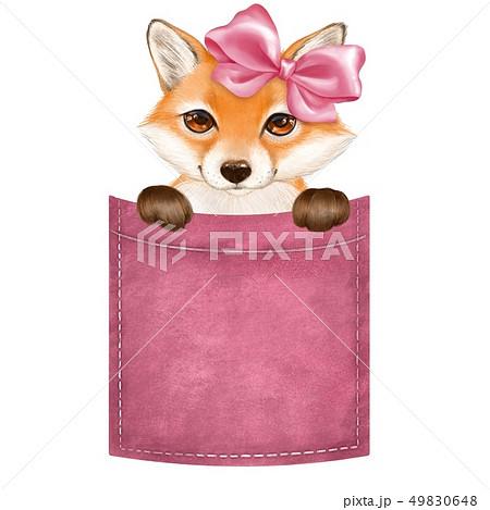 Cute little fox on pocket 49830648