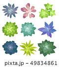 花 植物 カラーのイラスト 49834861