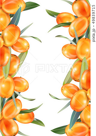 Sea buckthorn isolated on the white. Illustration in 3d style. The concept of realistic image of 49839715