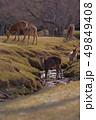 奈良公園 鹿 動物の写真 49849408