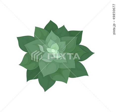 Home plant top view on white background. 49850677