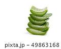アロエベラ 多肉植物 グリーンの写真 49863168
