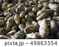ジャガイモの収穫 ジャガイモ じゃがいも 馬鈴薯 野菜 農業 人物 男性 畑 栽培 野菜畑 49863354