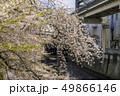 神田川 川 桜の写真 49866146