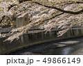神田川 川 桜の写真 49866149