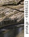 神田川 川 桜の写真 49866152