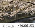 神田川 川 桜の写真 49866153