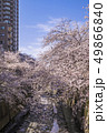 神田川 川 桜の写真 49866840