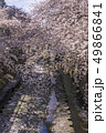神田川 川 桜の写真 49866841