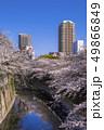 神田川 桜並木 桜の写真 49866849
