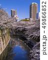 神田川 桜並木 桜の写真 49866852