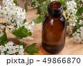 サンザシ 山査子 セイヨウサンザシの写真 49866870