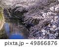 神田川 川 桜並木の写真 49866876
