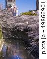 神田川 桜 春の写真 49866901