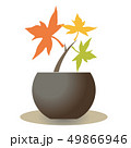 カエデの苗・3色ロゴ風 49866946