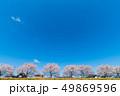 一目千本桜 桜 春の写真 49869596