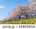 一目千本桜 桜 春の写真 49869604