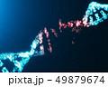 遺伝子 DNA らせんのイラスト 49879674