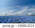 大阪まいしまシーサイドパークのネモフィラ 49881624