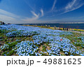 大阪まいしまシーサイドパークのネモフィラ 49881625