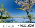 大阪まいしまシーサイドパークのネモフィラ 49881626