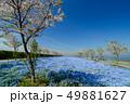 大阪まいしまシーサイドパークのネモフィラ 49881627
