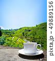 Sri Lanka tea hills. Tea cup and plantation. 49889156
