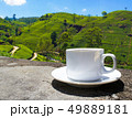 Sri Lanka tea hills. Tea cup and plantation. 49889181
