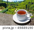 Sri Lanka tea hills. Tea cup and plantation. 49889190