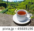 Sri Lanka tea hills. Tea cup and plantation. 49889196