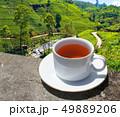 Sri Lanka tea hills. Tea cup and plantation. 49889206