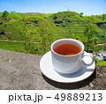 Sri Lanka tea hills. Tea cup and plantation. 49889213