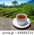 Sri Lanka tea hills. Tea cup and plantation. 49889234