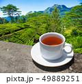Sri Lanka tea hills. Tea cup and plantation. 49889251