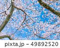 桜 春 花の写真 49892520
