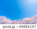 桜 春 花の写真 49894147