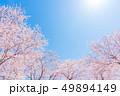 桜 春 花の写真 49894149