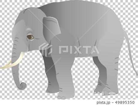 ゾウ 49895350