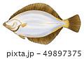 魚 海水魚 鮮魚のイラスト 49897375