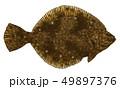 魚 海水魚 鮮魚のイラスト 49897376