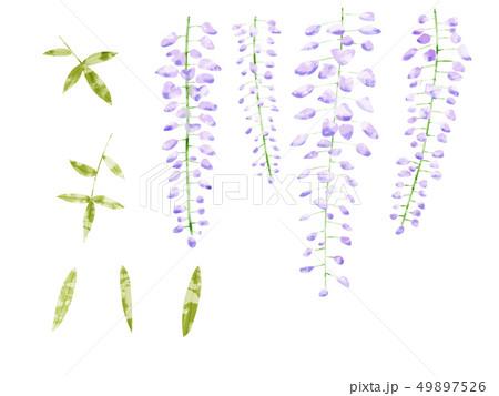藤の花 素材 49897526