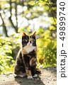 猫 ねこ ネコの写真 49899740