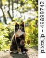 猫 ねこ ネコの写真 49899742