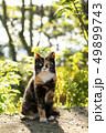 猫 野良猫 ねこの写真 49899743