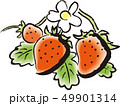 ベクター 苺 フルーツのイラスト 49901314