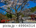 本殿の桜が満開の鞍馬寺 49904314