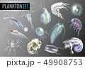海 マリン 生物学のイラスト 49908753