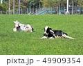 牛・ホルスタイン 49909354