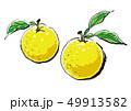 イラスト 6:柚子 49913582